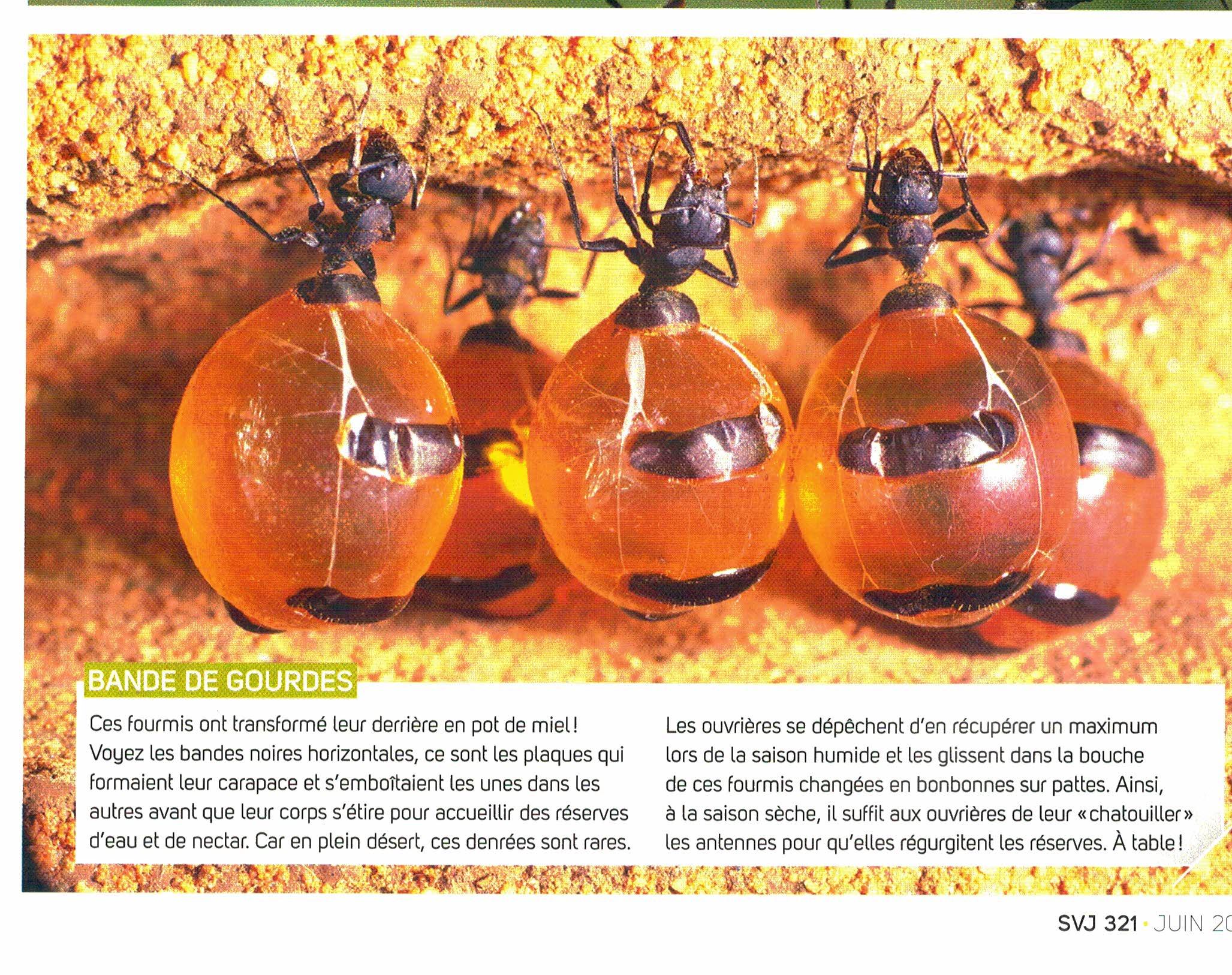 blague 3 fourmis dans le desert